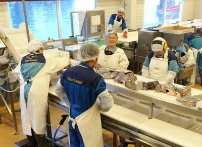 Greenland fish factory